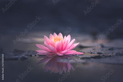 Stampa su Tela Water Lily Floating On The Water