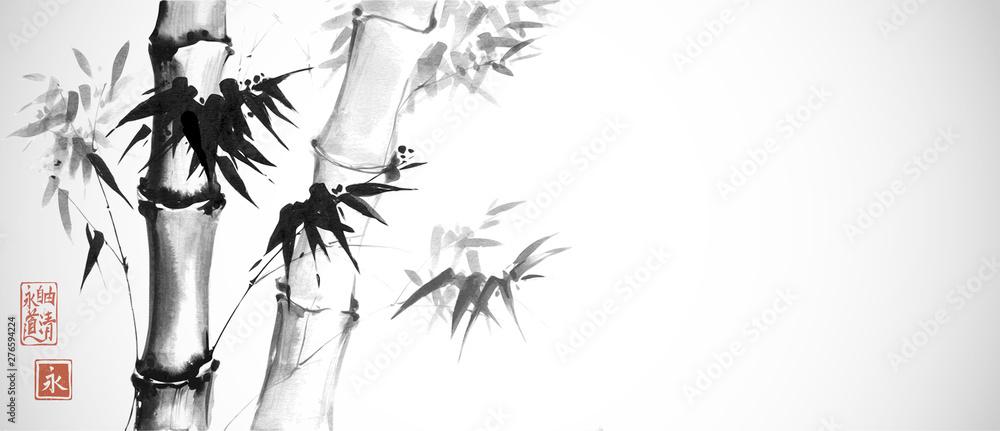Bambusowi drzewa na białym tle. Tradycyjne japońskie malowanie tuszem sumi-e. Hieroglify - wieczność. wolność, jasność, droga. <span>plik: #276594224 | autor: elinacious</span>