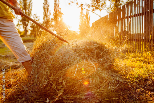 Fotografie, Tablou Farmer woman gathers hay with pitchfork at sunset in countryside