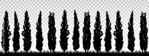 Obraz na plátně Realistic illustration of a windbreak from a row of poplar trees with grass and space for text