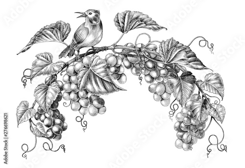 Valokuvatapetti Antique engraving illustration of grapes twig with little bird black and white c