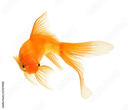 Obraz na plátně gold fish