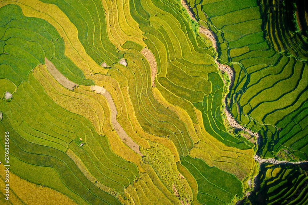 Nice ripen rice terraces viewed from a drone.