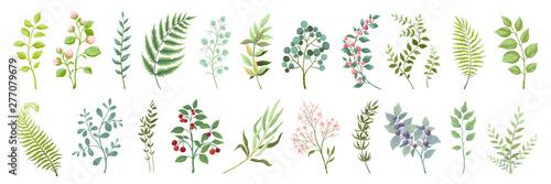 Photo Botanic elements