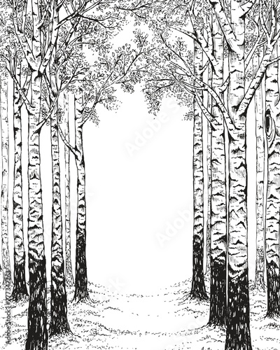 Stampa su Tela Birch forest, hand drawn illustration in vintage style with free space for your text