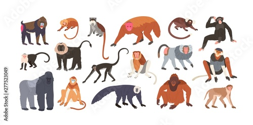 Tableau sur Toile Collection of cute funny exotic monkeys and apes isolated on white background