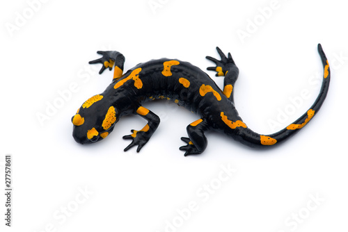 Photo The fire salamander isolated on white background