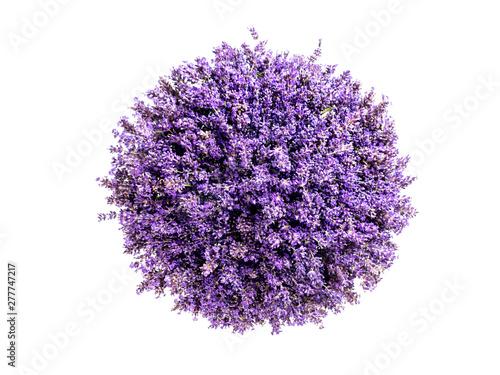 Little planet lavender