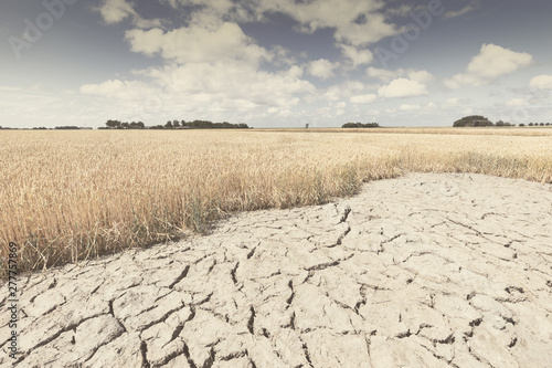 Tableau sur Toile Dry and arid land with failed crops due to climate change and global warming