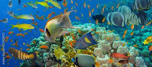 Stampa su Tela Coral and fish