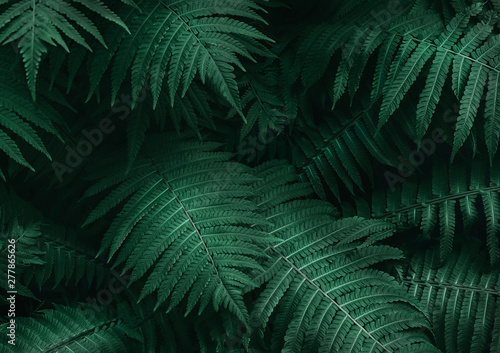 Obraz na plátně Perfect natural young fern leaves pattern background