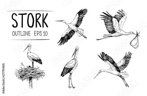 Carta da parati Sketch of stork illustrations