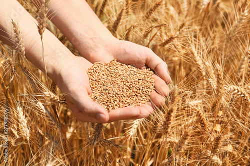 Foto Female farmer with wheat grains in field