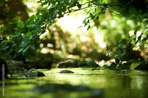 Fotomural Ruisseau rivière - forêt humide feuillage arbre vert - pierre galet dans l'eau