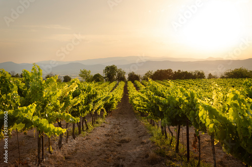 Tablou Canvas A vinyard in France photographed during a stunning sunset
