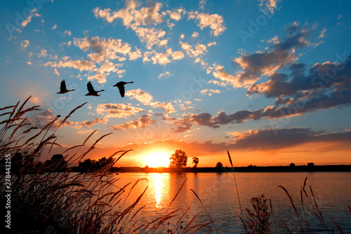 Geese flying over a beautiful sunset.