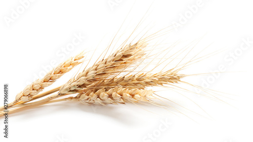 Foto Wheat spikelets on white background