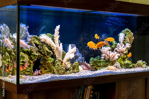 Freshwater aquarium in pseudo-sea style Fototapeta