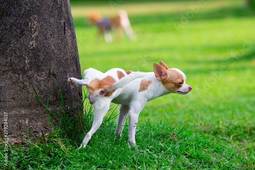 Photo Cute small dog peeing on a tree in an park.