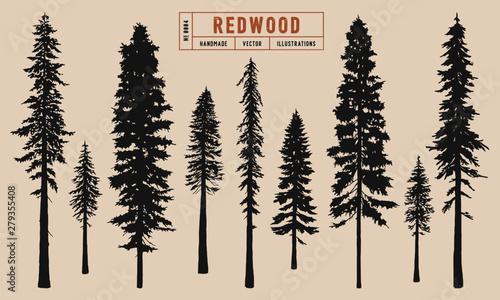 Fotografía Redwood tree silhouette vector illustration hand drawn