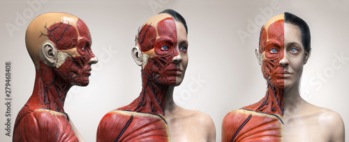 Canvas Human body anatomy muscles structure of a female, front view side view and persp