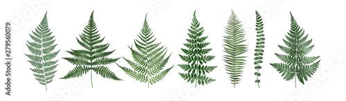 Fotografie, Obraz Set of fern leaves isolated on white