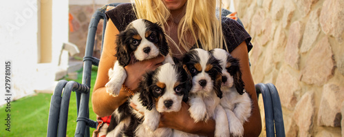 Fotografija happy owner photography holding four adorable King Charles Cavalier puppies in h