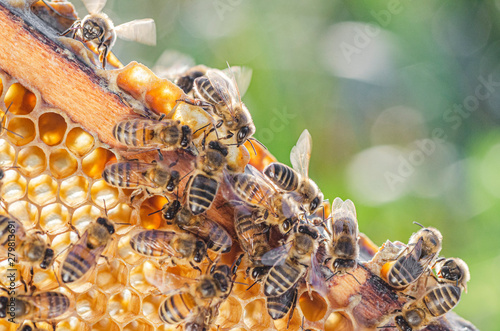 Fotografía honey bees on honeycomb in apiary in summertime