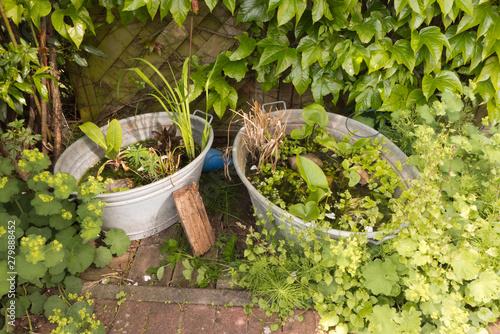Stampa su Tela Zwei Zinkwannen als kleine Gartenteiche bepflanzt mit Wasserpflanzen