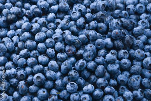 Obraz na plátne Fresh blueberry background. Texture blueberry berries close up.
