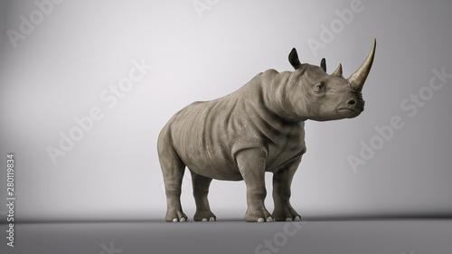 Fotografia Rhino in studio