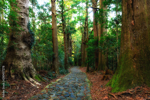Canvastavla Giant Japonica cypress forest