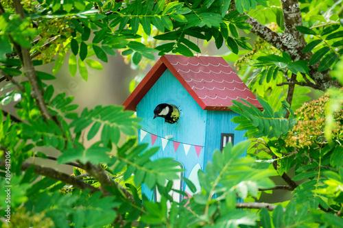 Bird feeding his chicks in a birdhouse Fototapeta