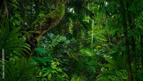 Fotografia Southeast Asian rainforest with deep jungle
