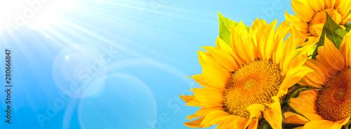 Fotografia Sunflower against blue sky