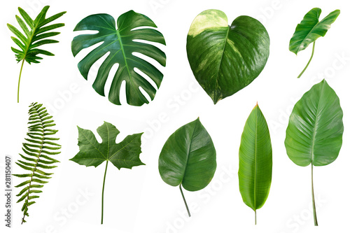 Photo Set of tropical green leaves isolated on white background.