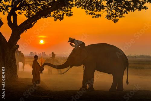 Valokuva Elephant made merit a monk's bowl