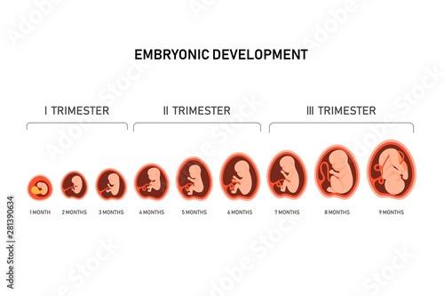 Valokuvatapetti Pregnancy fetal foetus development