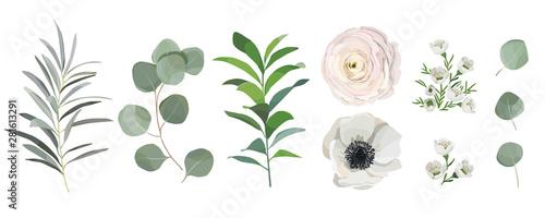Fotografija set of watercolor leaves, anemone ranunculus flowers, eucalyptus branches