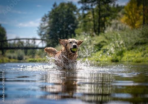Obraz na płótnie Dog running in the water