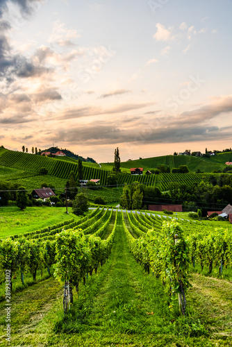 Fototapeta premium Wzgórza winogronowe i góry widok z ulicy wina w Styrii, Austria (Sulztal Weinstrasse) w lecie.