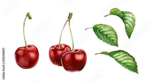 Canvastavla Realistic botanical watercolor illustration cherry fruits leaves collection: who