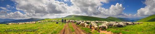 Obraz na płótnie A flock of sheep on a mountain