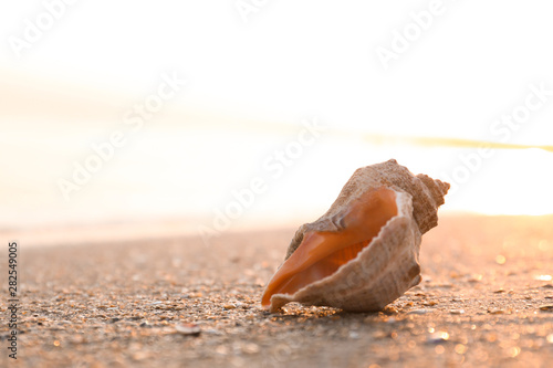 Fotomural Sunlit sandy beach with beautiful seashell on summer day