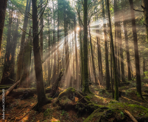 Amazing sunbeams through trees in the forest in Green Point Campground on Long Beach in Tofino, British Columbia, Canada. Fototapete