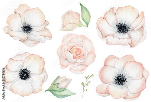 Slika na platnu Watercolor anemone rose flowers illustration isolated on the white background
