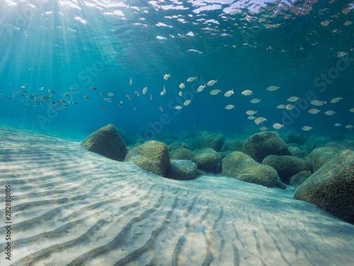 Carta da parati Mediterranean sea floor with sand, rocks and a lot fish in background