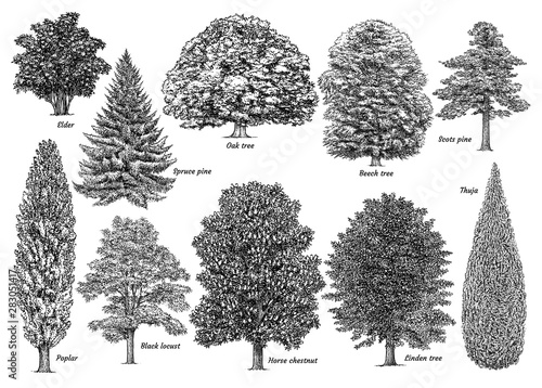 Tree collection, illustration, drawing, engraving, ink, line art, vector Fototapet