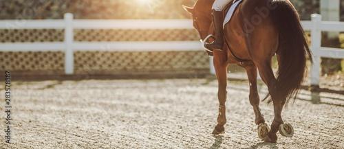 Fotografija Horse Riding in Sunset