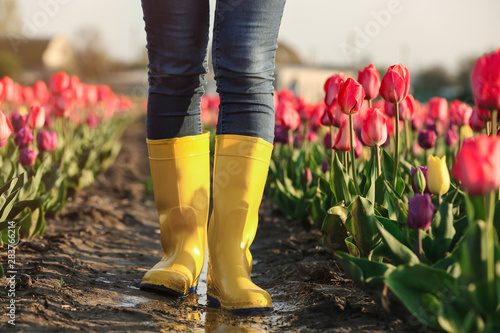 Woman in rubber boots walking across field with beautiful tulips after rain, clo Fototapet